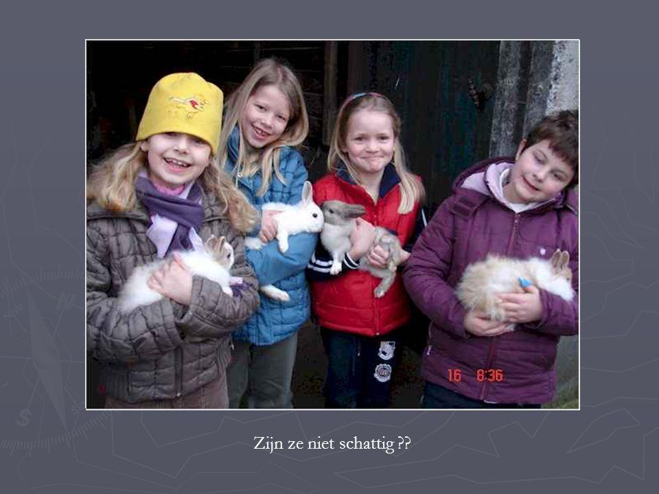 Tijdens de voormiddag bezochten we een varkenskwekerij.