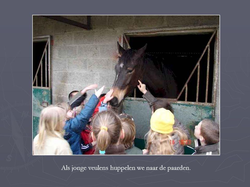 Als jonge veulens huppelen we naar de paarden.