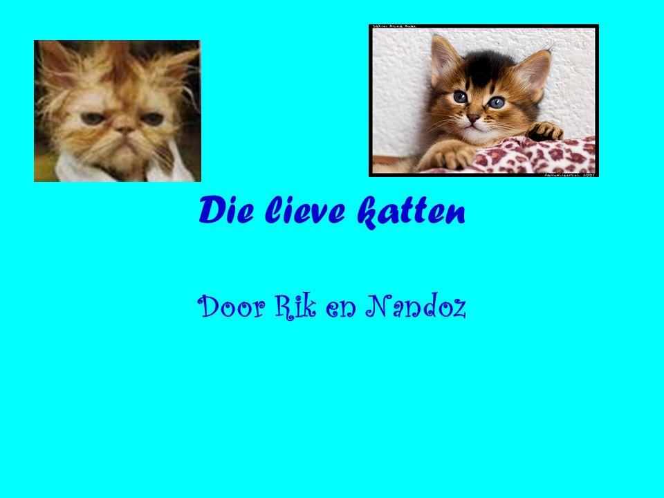 Die lieve katten Door Rik en Nandoz