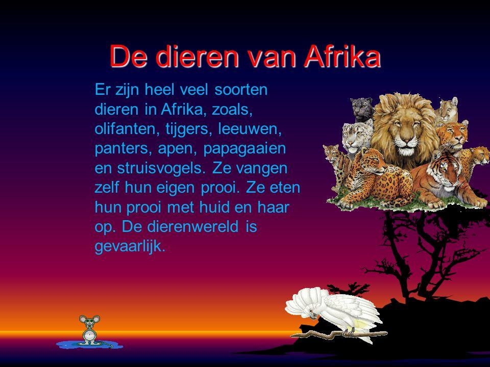 De dieren van Afrika Er zijn heel veel soorten dieren in Afrika, zoals, olifanten, tijgers, leeuwen, panters, apen, papagaaien en struisvogels. Ze van