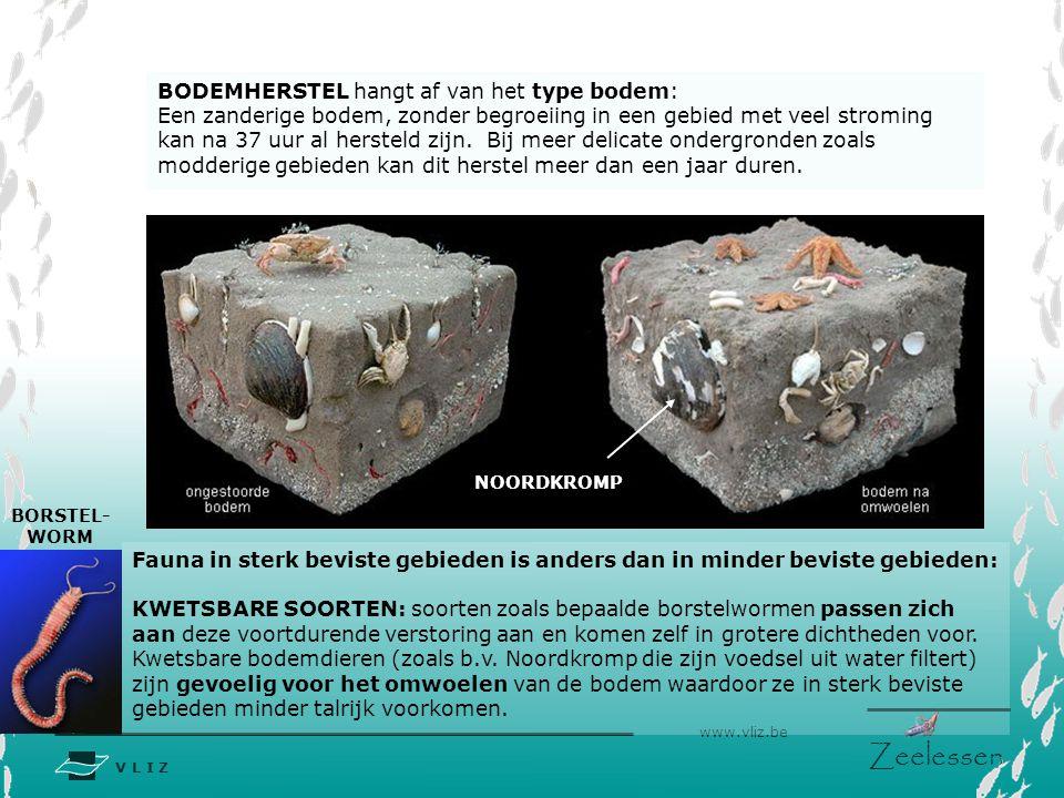 V L I Z www.vliz.be Zeelessen BODEMHERSTEL hangt af van het type bodem: Een zanderige bodem, zonder begroeiing in een gebied met veel stroming kan na