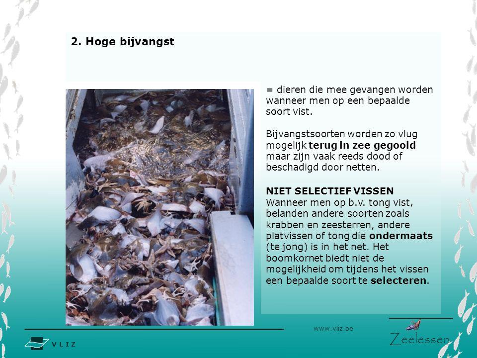 V L I Z www.vliz.be Zeelessen = dieren die mee gevangen worden wanneer men op een bepaalde soort vist. Bijvangstsoorten worden zo vlug mogelijk terug