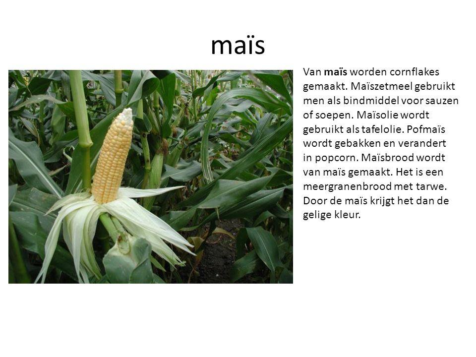 maïs Van maïs worden cornflakes gemaakt. Maïszetmeel gebruikt men als bindmiddel voor sauzen of soepen. Maïsolie wordt gebruikt als tafelolie. Pofmaïs