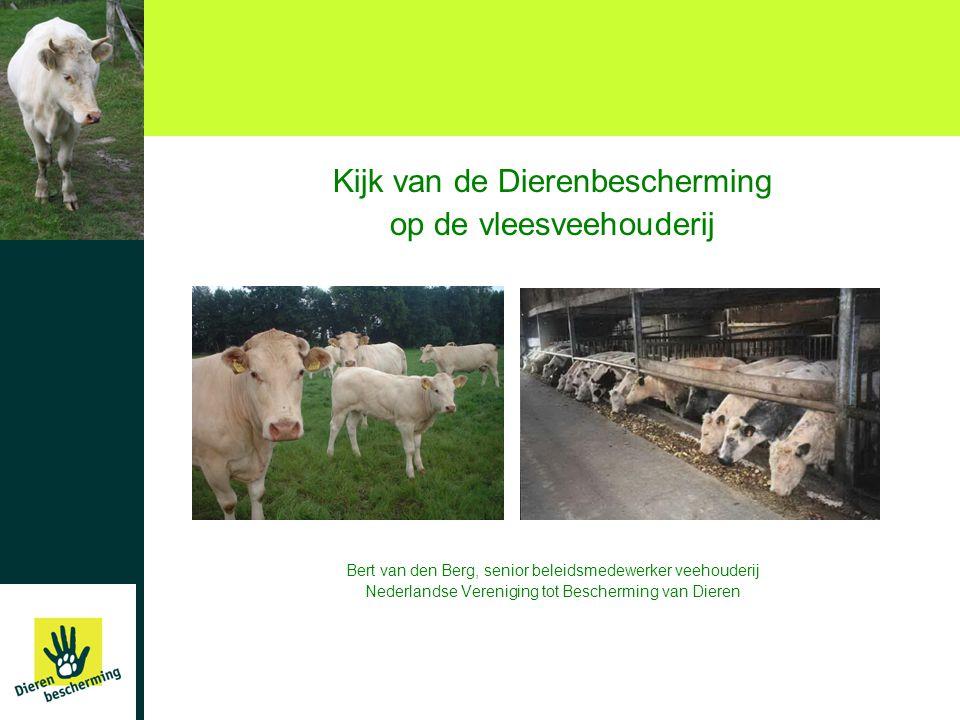 Kijk van de Dierenbescherming op de vleesveehouderij Bert van den Berg, senior beleidsmedewerker veehouderij Nederlandse Vereniging tot Bescherming van Dieren