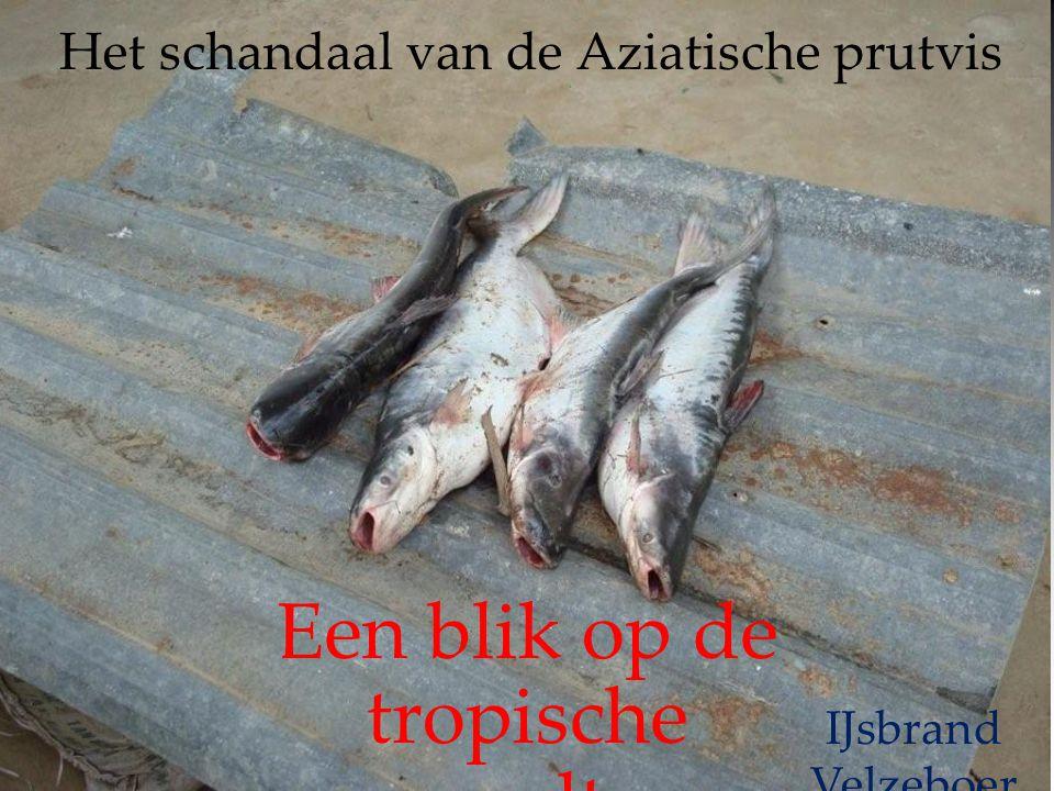 Het schandaal van de Aziatische prutvis Een blik op de tropische aquacultuur. welzijn of gifbeker? IJsbrand Velzeboer Chemische kring Zwolle 26 februa