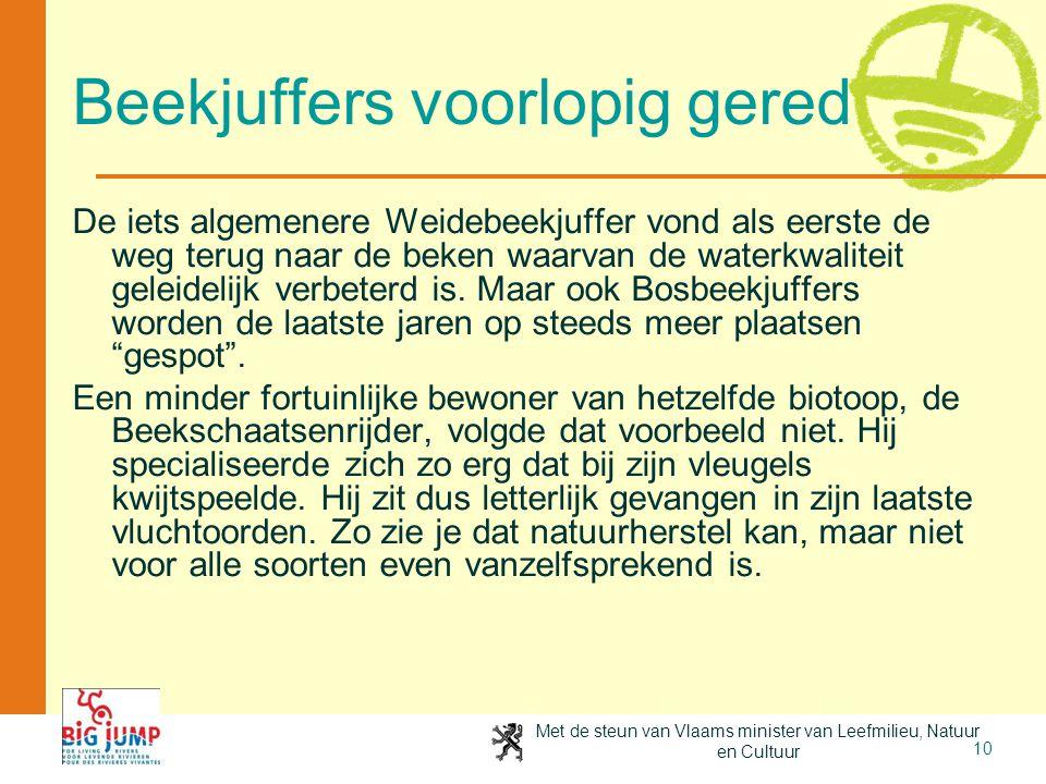 Met de steun van Vlaams minister van Leefmilieu, Natuur en Cultuur 10 Beekjuffers voorlopig gered De iets algemenere Weidebeekjuffer vond als eerste d