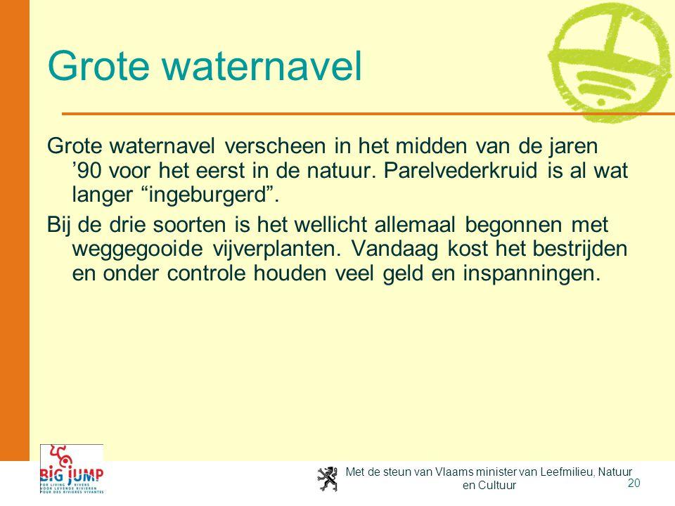 Met de steun van Vlaams minister van Leefmilieu, Natuur en Cultuur 20 Grote waternavel Grote waternavel verscheen in het midden van de jaren '90 voor