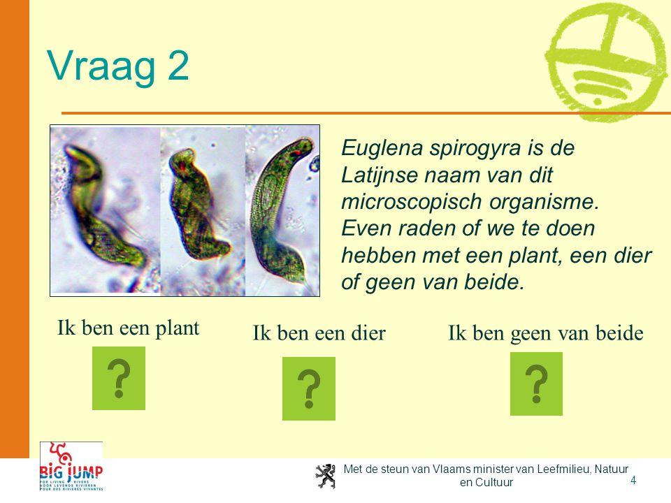 Met de steun van Vlaams minister van Leefmilieu, Natuur en Cultuur 4 Vraag 2 Ik ben een plant Ik ben een dierIk ben geen van beide Euglena spirogyra i