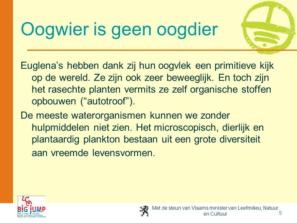 Met de steun van Vlaams minister van Leefmilieu, Natuur en Cultuur 5 Oogwier is geen oogdier Euglena's hebben dank zij hun oogvlek een primitieve kijk