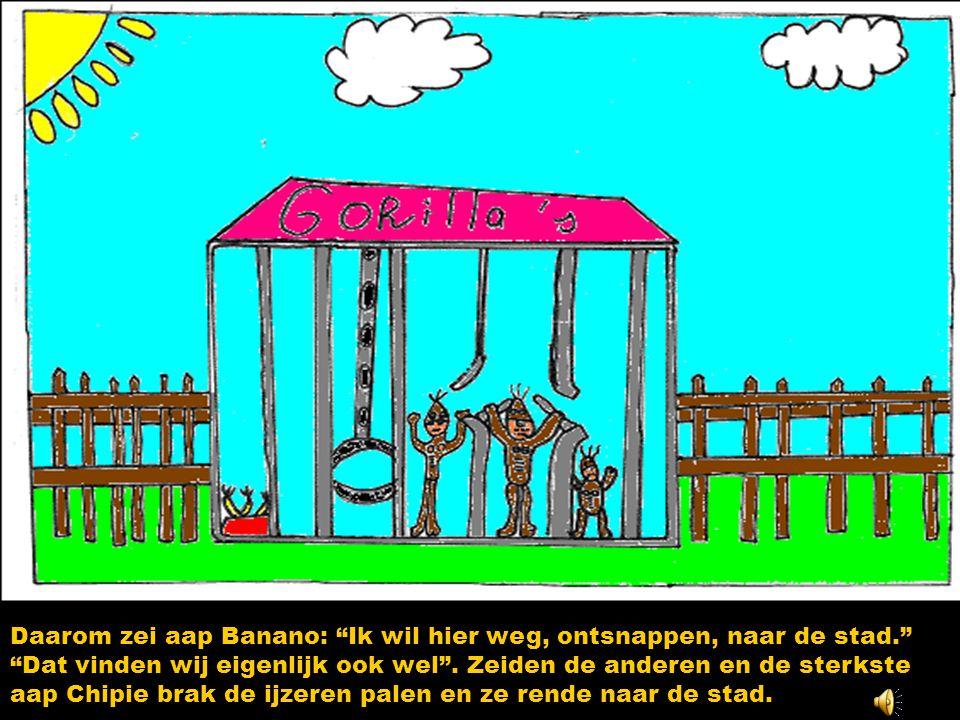 Daarom zei aap Banano: Ik wil hier weg, ontsnappen, naar de stad. Dat vinden wij eigenlijk ook wel .