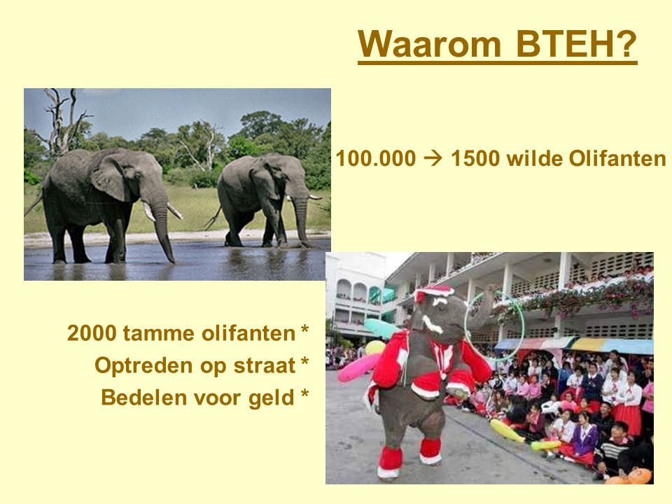 Bring The Elephant Home Breng de Olifant thuis BTEH