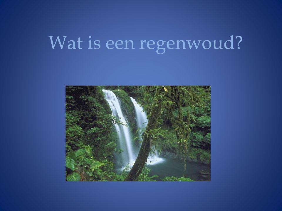 Wat is een regenwoud?