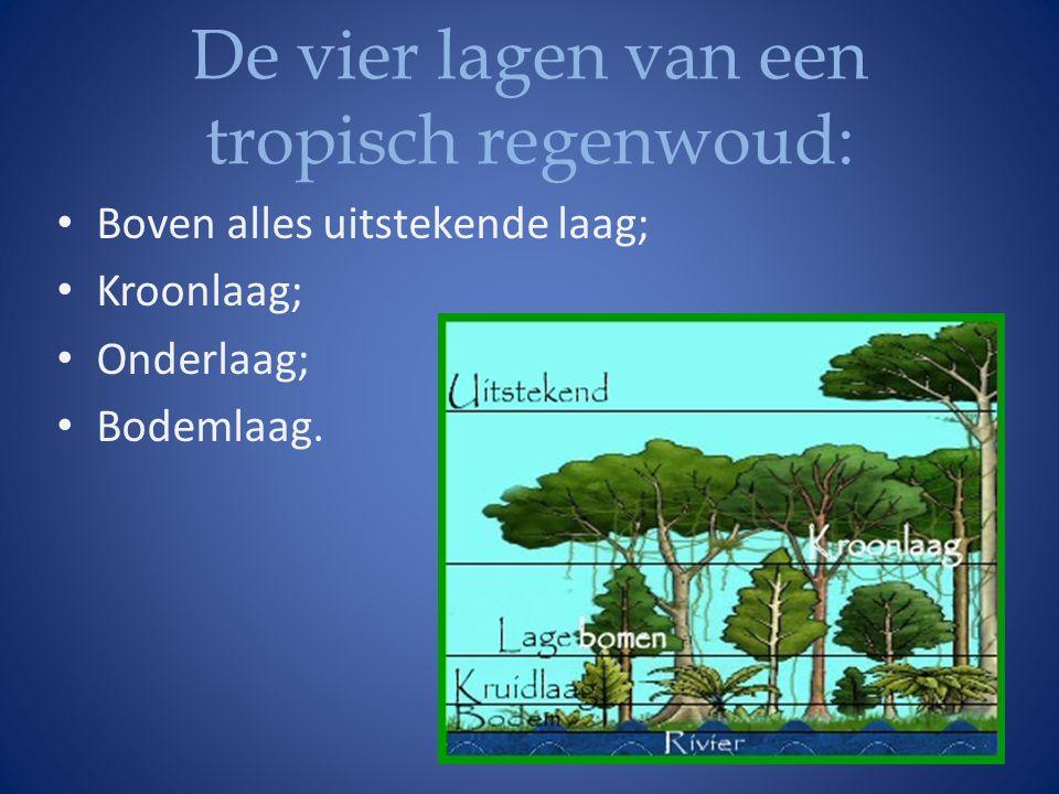 De vier lagen van een tropisch regenwoud: • Boven alles uitstekende laag; • Kroonlaag; • Onderlaag; • Bodemlaag.