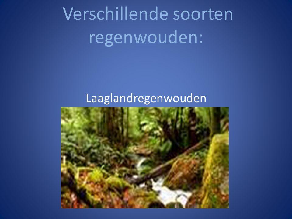 Verschillende soorten regenwouden: Laaglandregenwouden