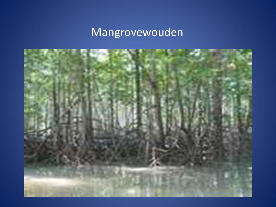 Hoe bescherm je het tropisch regenwoud.