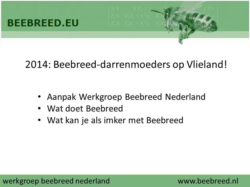 werkgroep beebreed nederlandwww.beebreed.nl 2014: Beebreed-darrenmoeders op Vlieland! • Aanpak Werkgroep Beebreed Nederland • Wat doet Beebreed • Wat