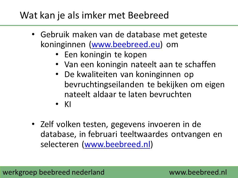 werkgroep beebreed nederlandwww.beebreed.nl 2014: Beebreed-darrenmoeders op Vlieland.