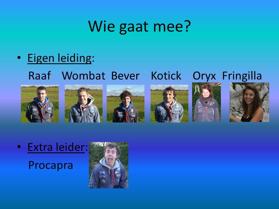 Wie gaat mee? • Eigen leiding: Raaf Wombat Bever Kotick Oryx Fringilla • Extra leider: Procapra