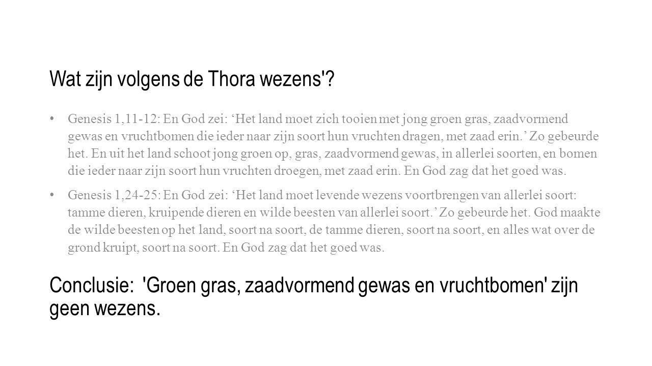 Wat zijn volgens de Thora wezens .