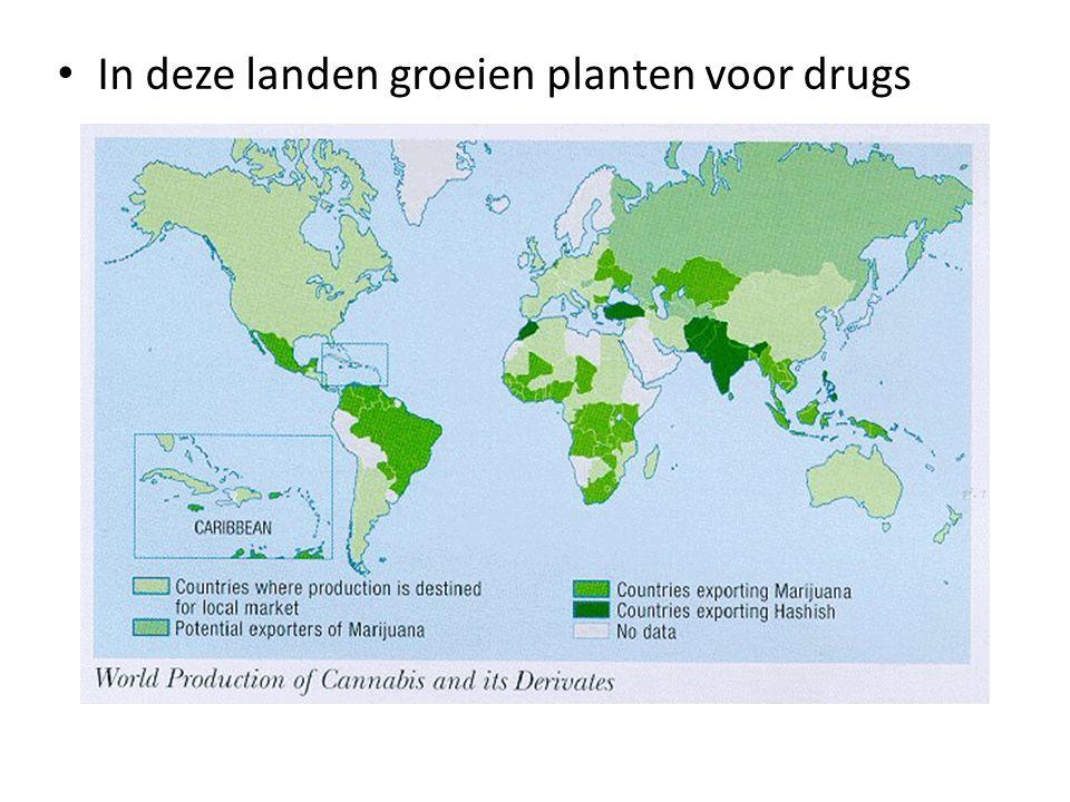 • In deze landen groeien planten voor drugs