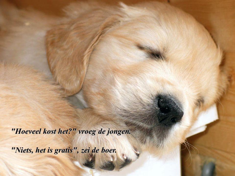 Met tranen in zijn ogen pakte de boer de kleine puppy op.