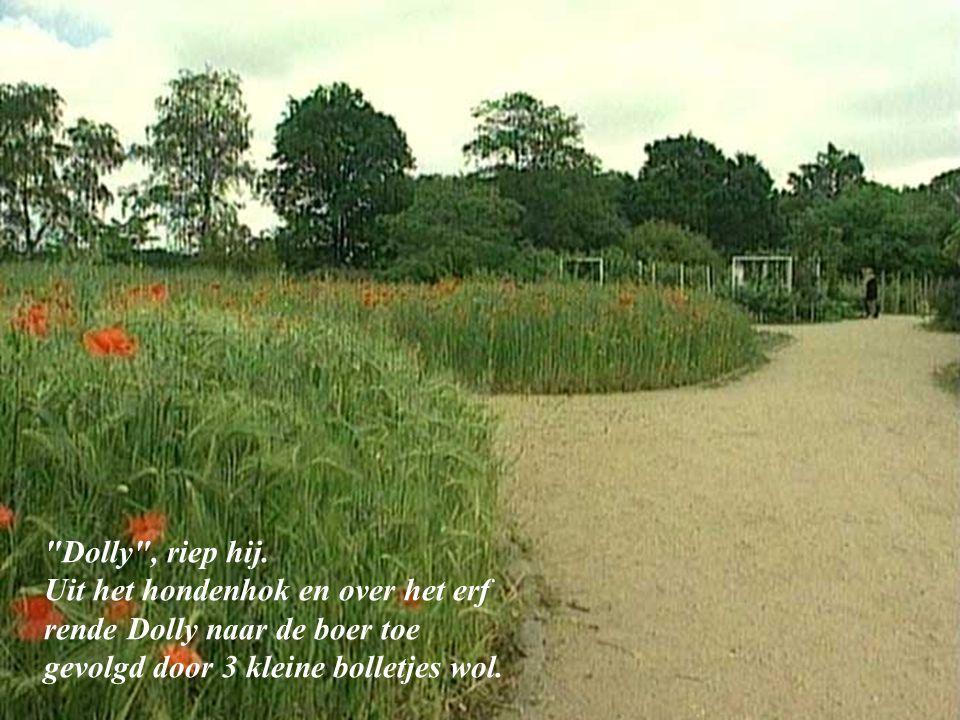 De boer aankijkend zei hij: Weet u meneer, ik kan zelf ook niet zo goed rennen en dit hondje heeft iemand nodig die hem begrijpt .