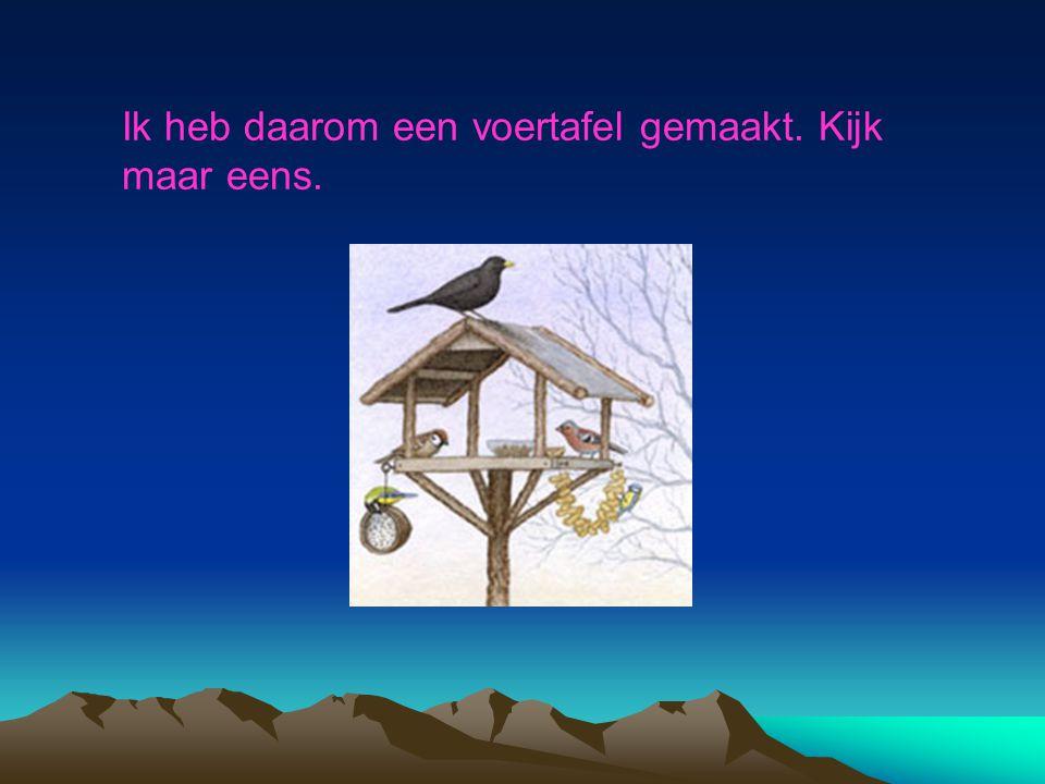 De vogels hebben het vaak moeilijk. Vooral in een strenge winter.