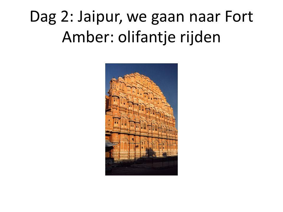 Dag 2: Jaipur, we gaan naar Fort Amber: olifantje rijden