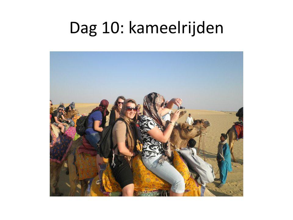 Dag 10: kameelrijden