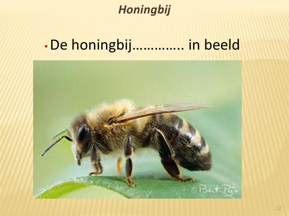 Honingbij • De honingbij………….. in beeld 12