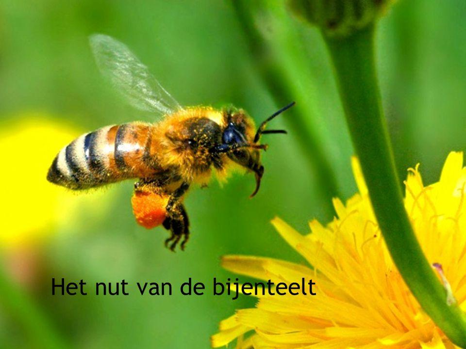 13 Het nut van de bijenteelt