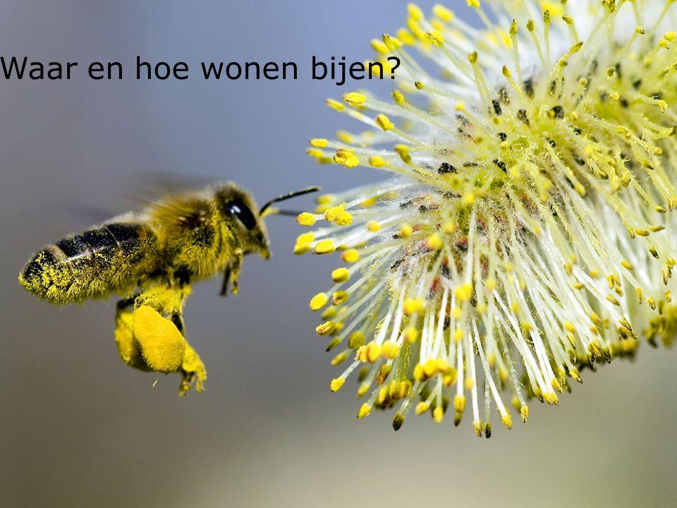 21 Waar en hoe wonen bijen
