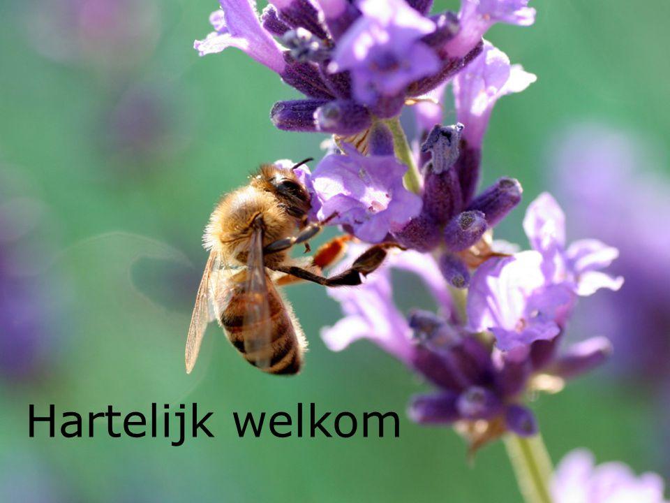 Imkervereniging De Verenigde Taxanders Tessenderlo Presentatie: Frans Daems De honingbij als insect.