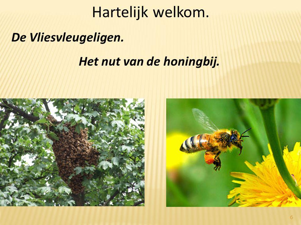 Hartelijk welkom. De Vliesvleugeligen. Het nut van de honingbij. 6