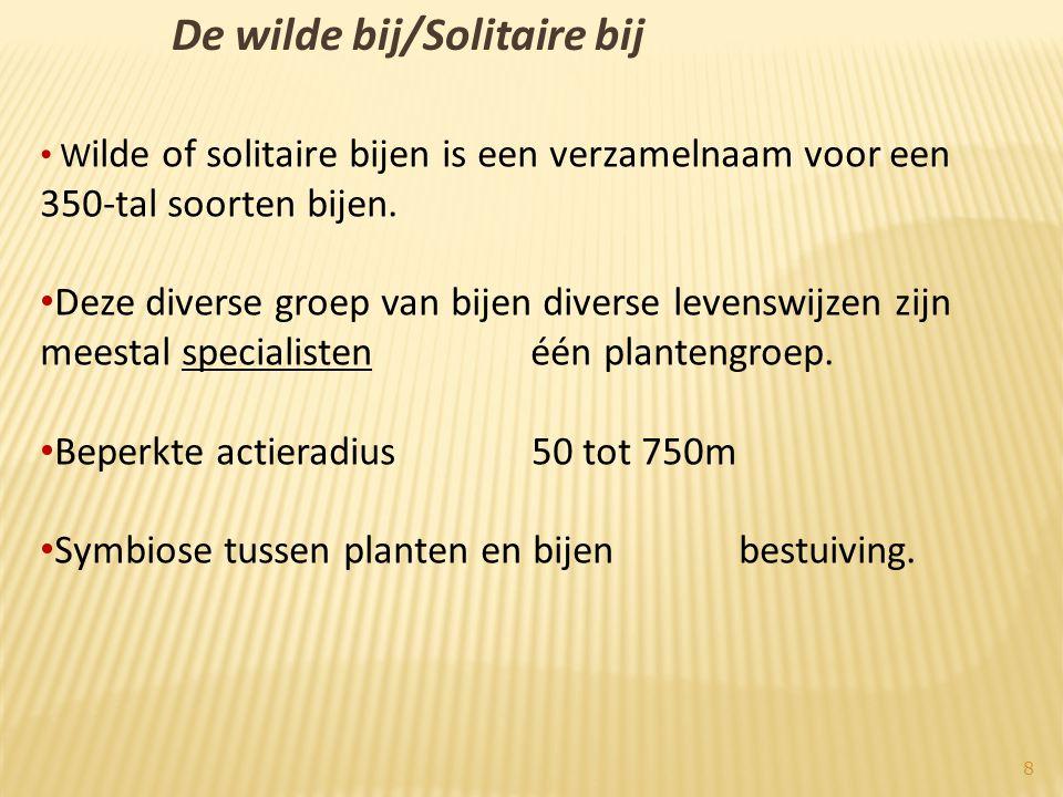 De wilde bij/Solitaire bij • W ilde of solitaire bijen is een verzamelnaam voor een 350-tal soorten bijen.
