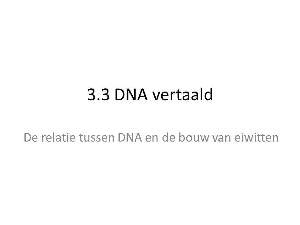 3.3 DNA vertaald De relatie tussen DNA en de bouw van eiwitten