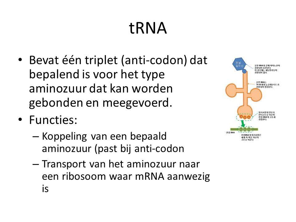 tRNA • Bevat één triplet (anti-codon) dat bepalend is voor het type aminozuur dat kan worden gebonden en meegevoerd. • Functies: – Koppeling van een b
