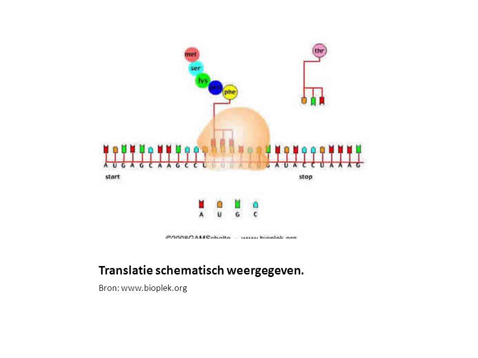 Translatie schematisch weergegeven. Bron: www.bioplek.org