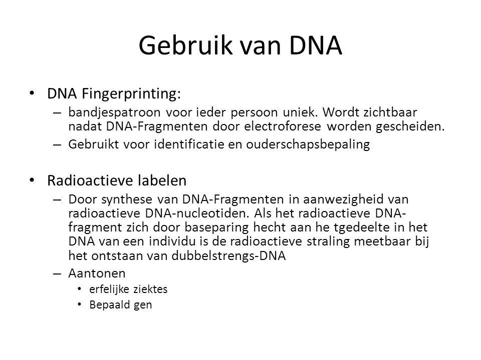 Gebruik van DNA • DNA Fingerprinting: – bandjespatroon voor ieder persoon uniek. Wordt zichtbaar nadat DNA-Fragmenten door electroforese worden gesche