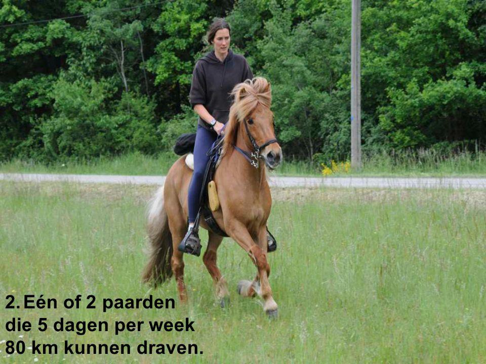 2.Eén of 2 paarden die 5 dagen per week 80 km kunnen draven.
