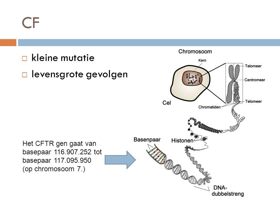 CF  kleine mutatie  levensgrote gevolgen Het CFTR gen gaat van basepaar 116.907.252 tot basepaar 117.095.950 (op chromosoom 7.)