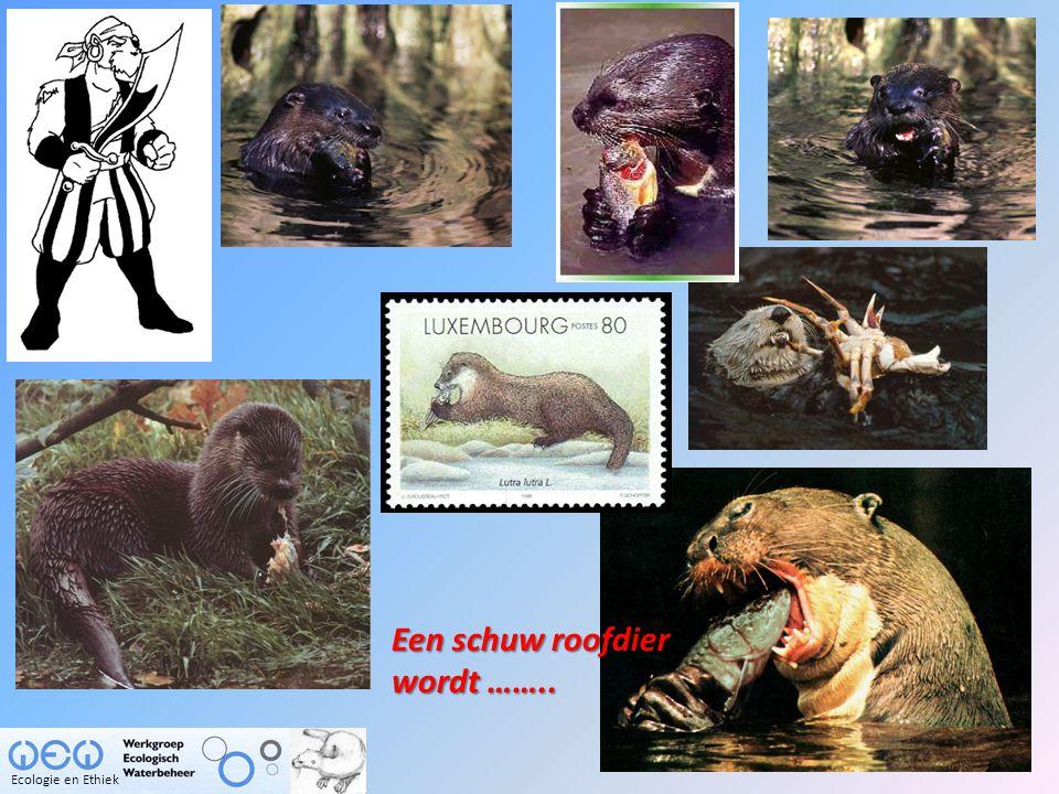 Een schuw roofdier wordt …….. Ecologie en Ethiek