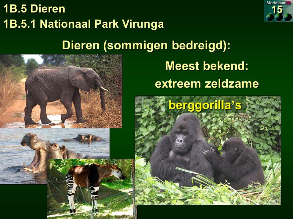 1B.5.1 Nationaal Park Virunga 1B.5 Dieren 15 Dieren (sommigen bedreigd): Meest bekend: extreem zeldzame berggorilla ' s