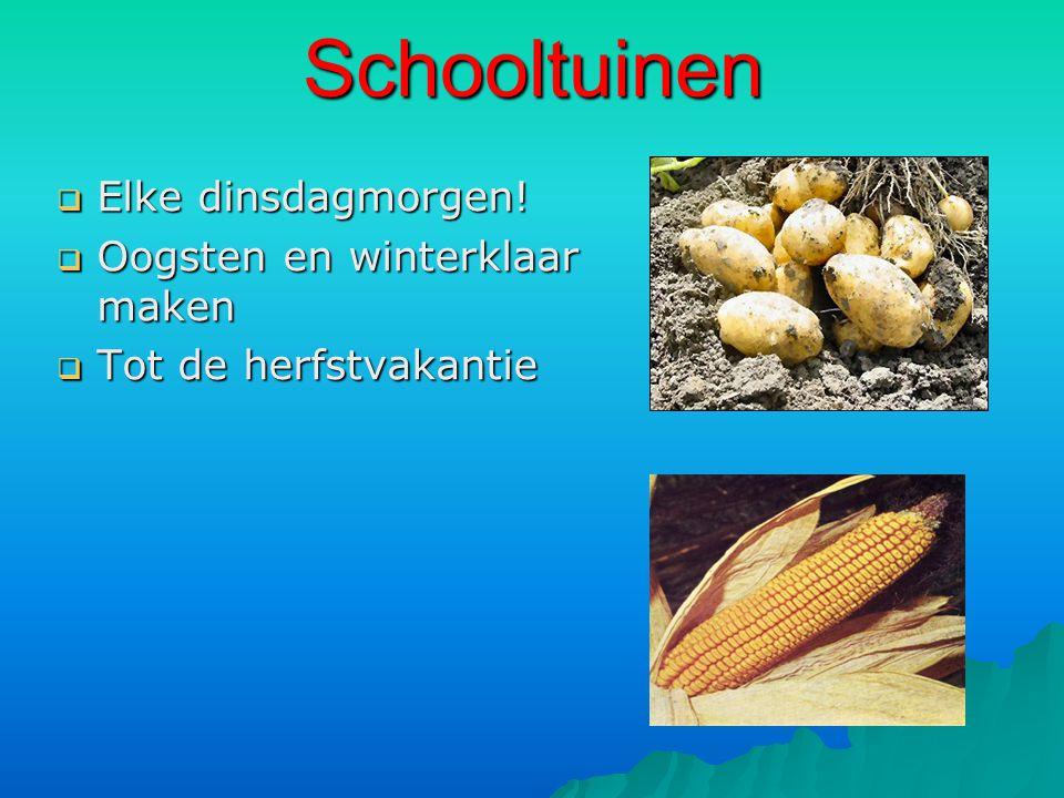 Schooltuinen  Elke dinsdagmorgen!  Oogsten en winterklaar maken  Tot de herfstvakantie