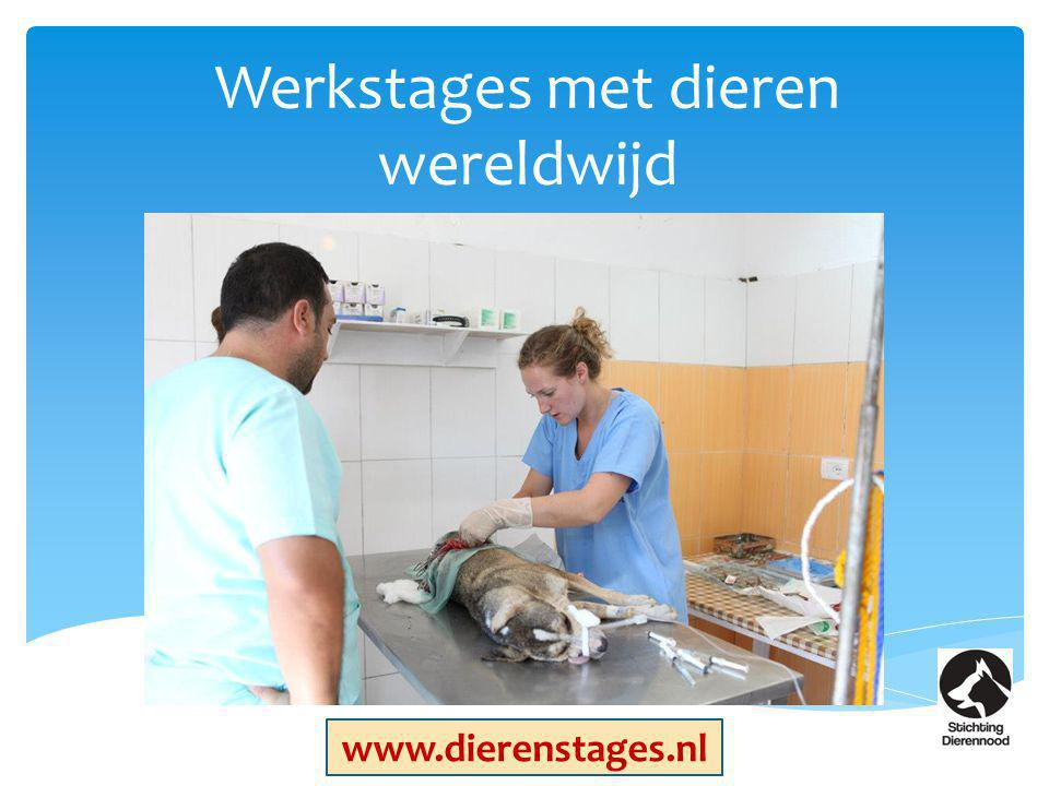 Werkstages met dieren wereldwijd www.dierenstages.nl