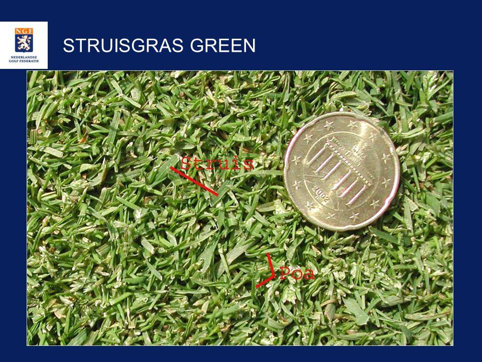 STRUISGRAS GREEN