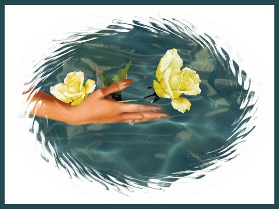 Het leven is geen toeval, maar een spiegel van jouw eigen handelingen. DE ECHO VAN HET LEVEN !