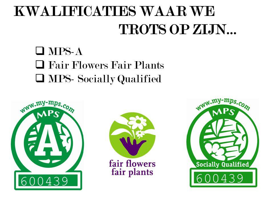Het assortiment bestaat uit een grote variatijd Phalaenopsis van diverse stekleveranciers (Anthura, Microflor, Peerdeman en Floricultura) … Purple Haze … Ikaria … Solid Gold… Heartbreaker … Atlantis