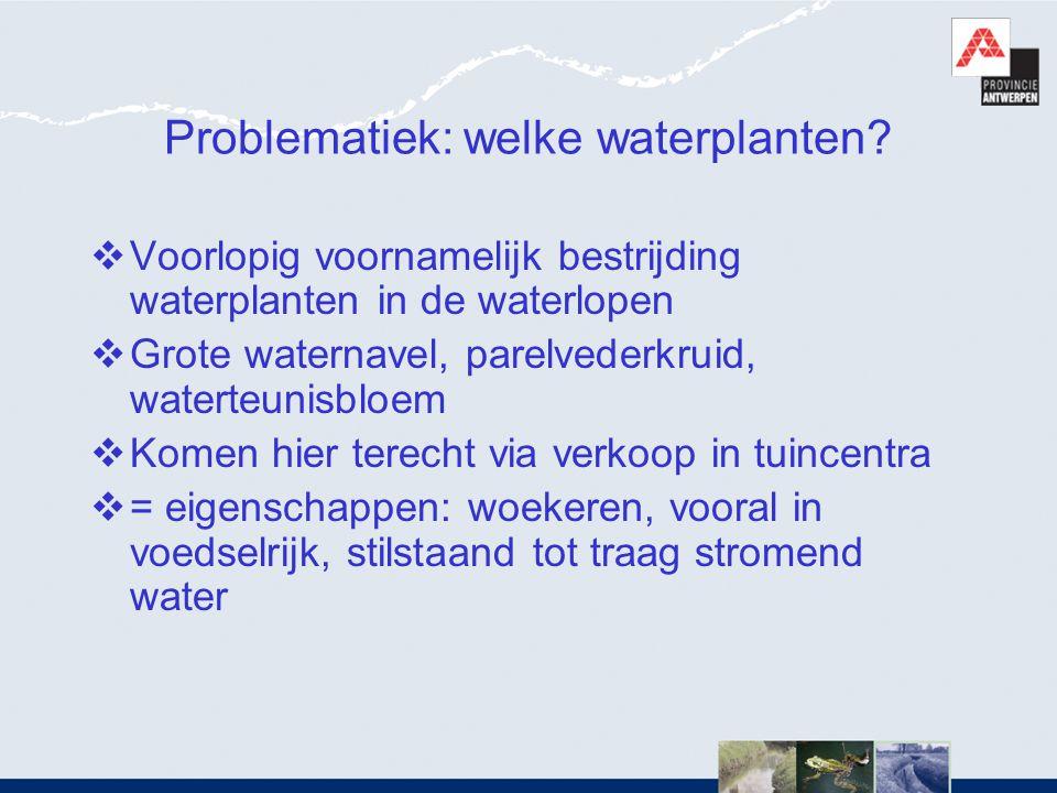 Problematiek: welke waterplanten?  Voorlopig voornamelijk bestrijding waterplanten in de waterlopen  Grote waternavel, parelvederkruid, waterteunisb