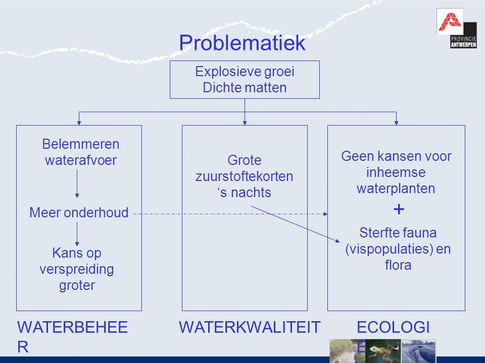 Problematiek Explosieve groei Dichte matten WATERBEHEE R WATERKWALITEITECOLOGI E Belemmeren waterafvoer Meer onderhoud Kans op verspreiding groter Gro